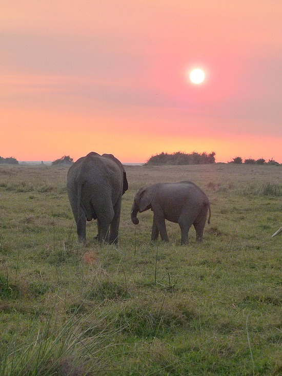 1.1287011955.elephants-at-sunset