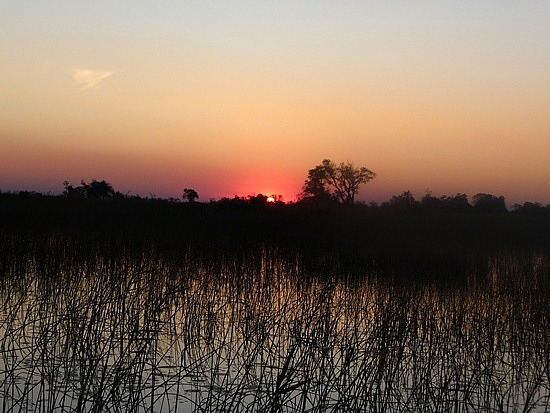 1.1287616771.sunset-through-the-reeds-on-the-water-near-cam