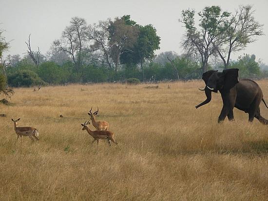 1.1287643010.elephant-and-impala