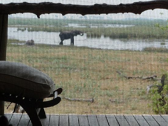 1.1287643010.elephant-viewed-through-my-window-screen