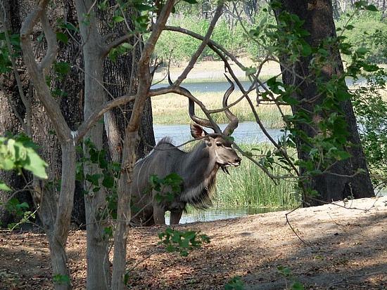 1.1287643010.male-kudu