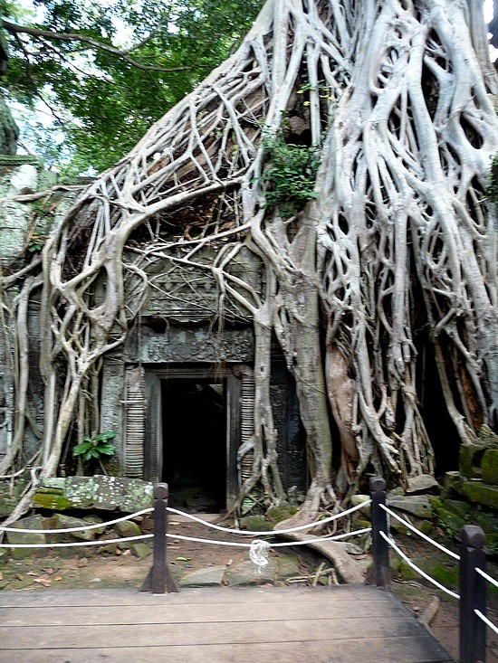 1.1289777088.ta-prohm-famous-entry-in-tomb-raider