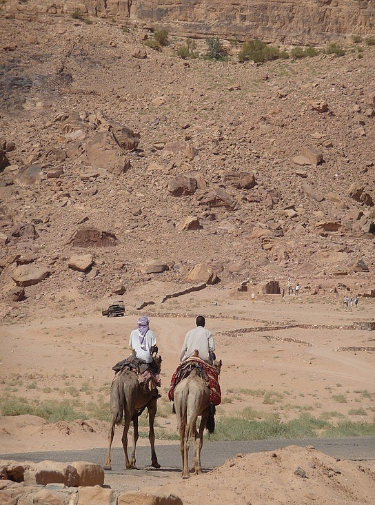 1.1286407065.camels-in-the-desert-at-wadi-rum