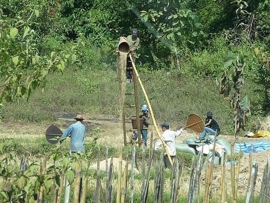 1.1289517873.harvesting-rice