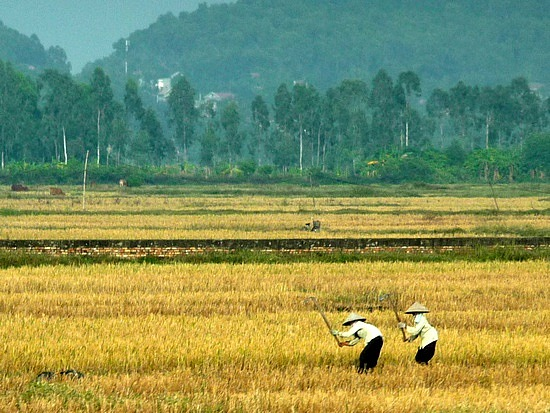 1.1288999430.farming-in-the-fields-on-the-way-to-hanoi