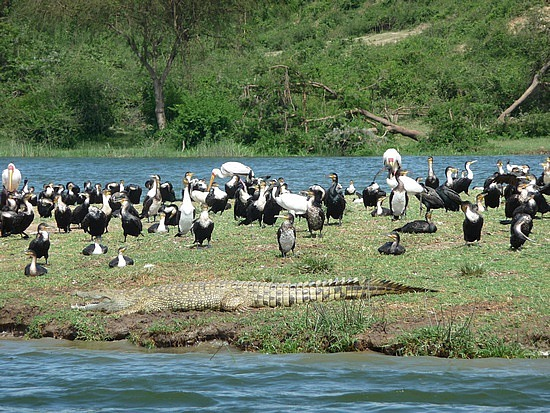 2.1318879677.my-nemisis-with-a-flock-of-birds