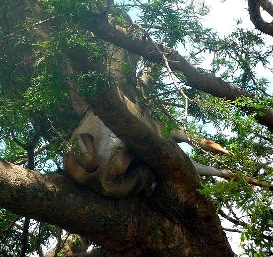 2.1319138980.ugandan-kob-dinner-in-a-tree-in-ishasha