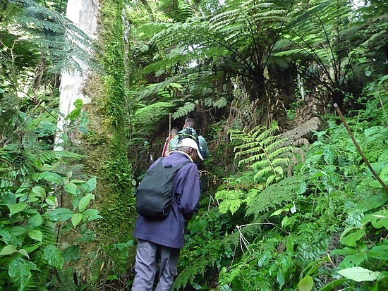 2.1319398215.hiking-in-bwindi-my-porter-in-front-of-me