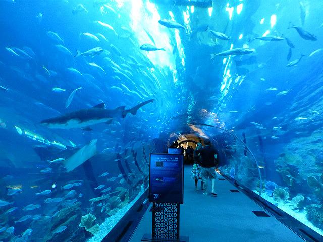3.1349529021.the-shark-tunnel