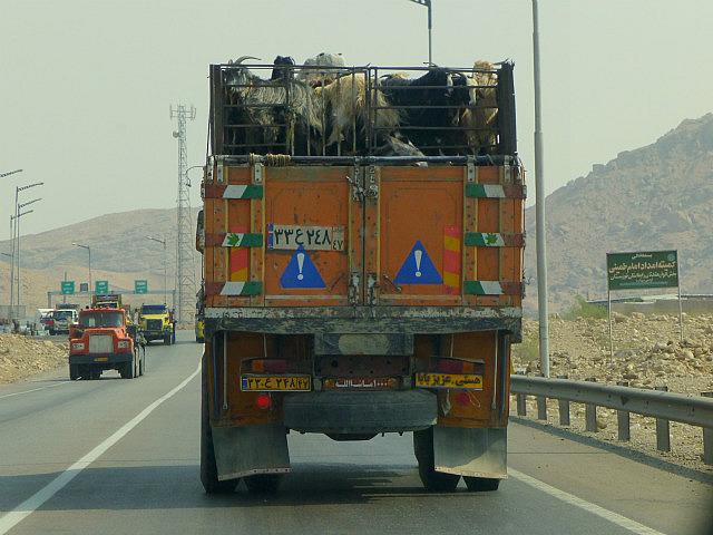 3.1349977505.1-nomads-taking-goats-to-market