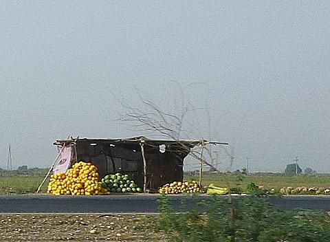 3.1349977505.yummy-iranian-melons
