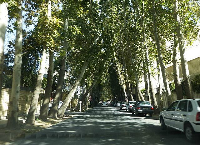 3.1350627064.tree-lined-street-in-isfahan
