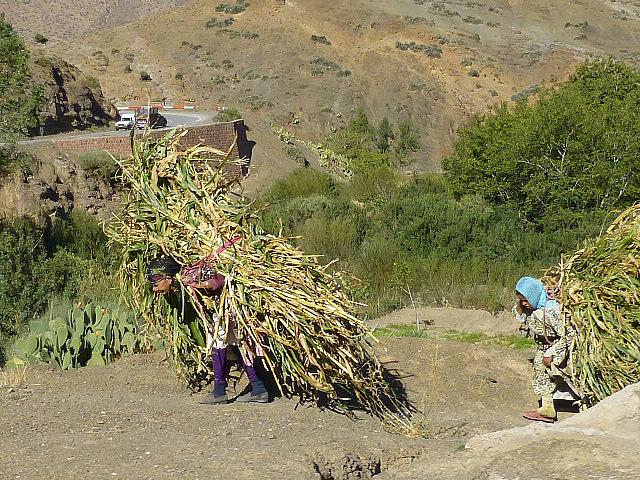 4.1380669505.bedouin-women-hauling-dead-branches