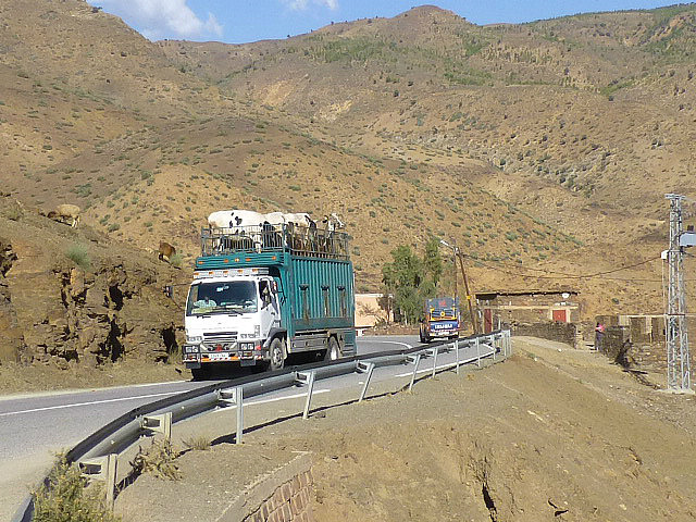 4.1380669505.trucking-cows-through-the-high-atlas-mountains