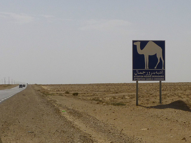 4.1381533784.camel-crossing-in-the-sahara