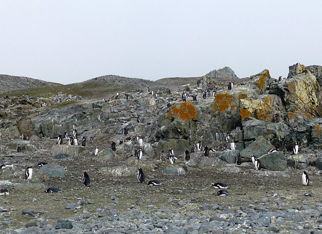 6.1424208981.penguins-on-king-george-island