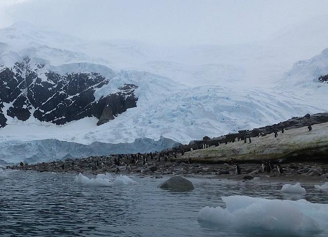 6.1424591583.gentoo-penguin-colony-at-niko-harbor