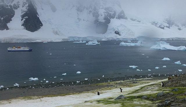 6.1424591583.gentoo-penguins-danco-island-rain-spot-on-lens