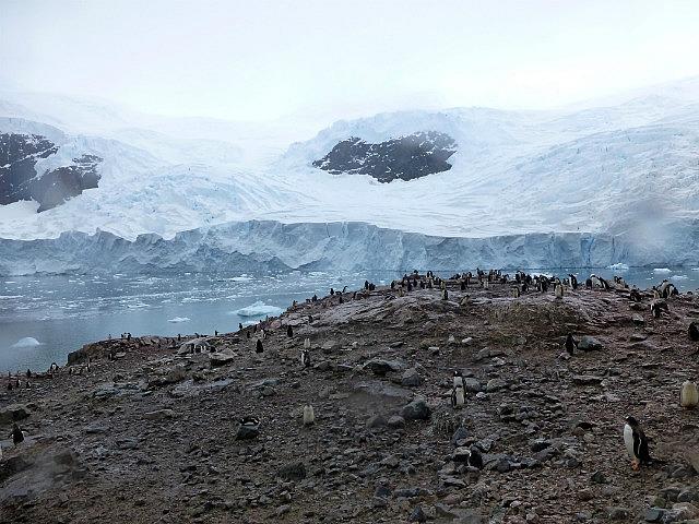 6.1424591583.penguin-colony-at-niko-harbor