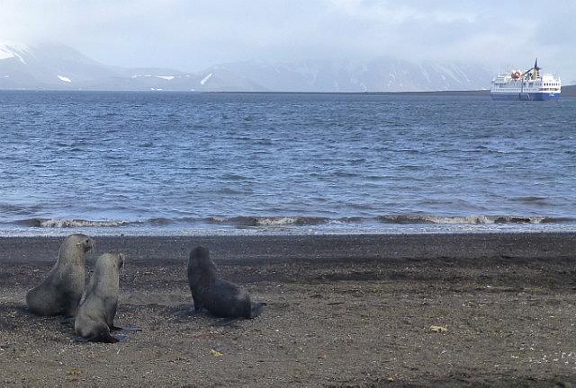 6.1424593041.fur-seals-on-deception-island