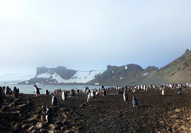 6.1424593041.gentoo-and-chinstrap-penguins-at-hannah-point