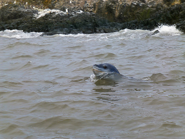 6.1424593041.the-leopard-seal-after-penguin-lunch