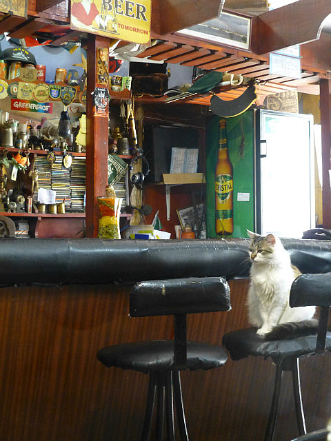 6.1423413520.cat-wandered-into-a-bar