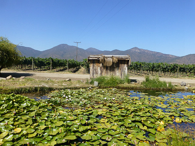 6.1423413520.emilian-vineyards-hen-house-and-pond