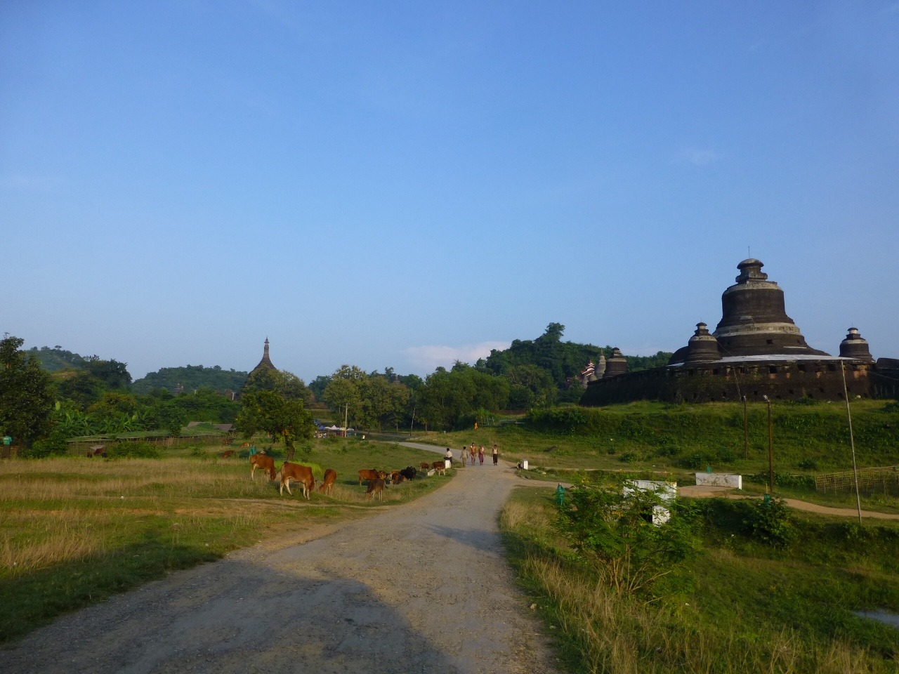 7.1477520383.mrauk-u-temples-and-cows