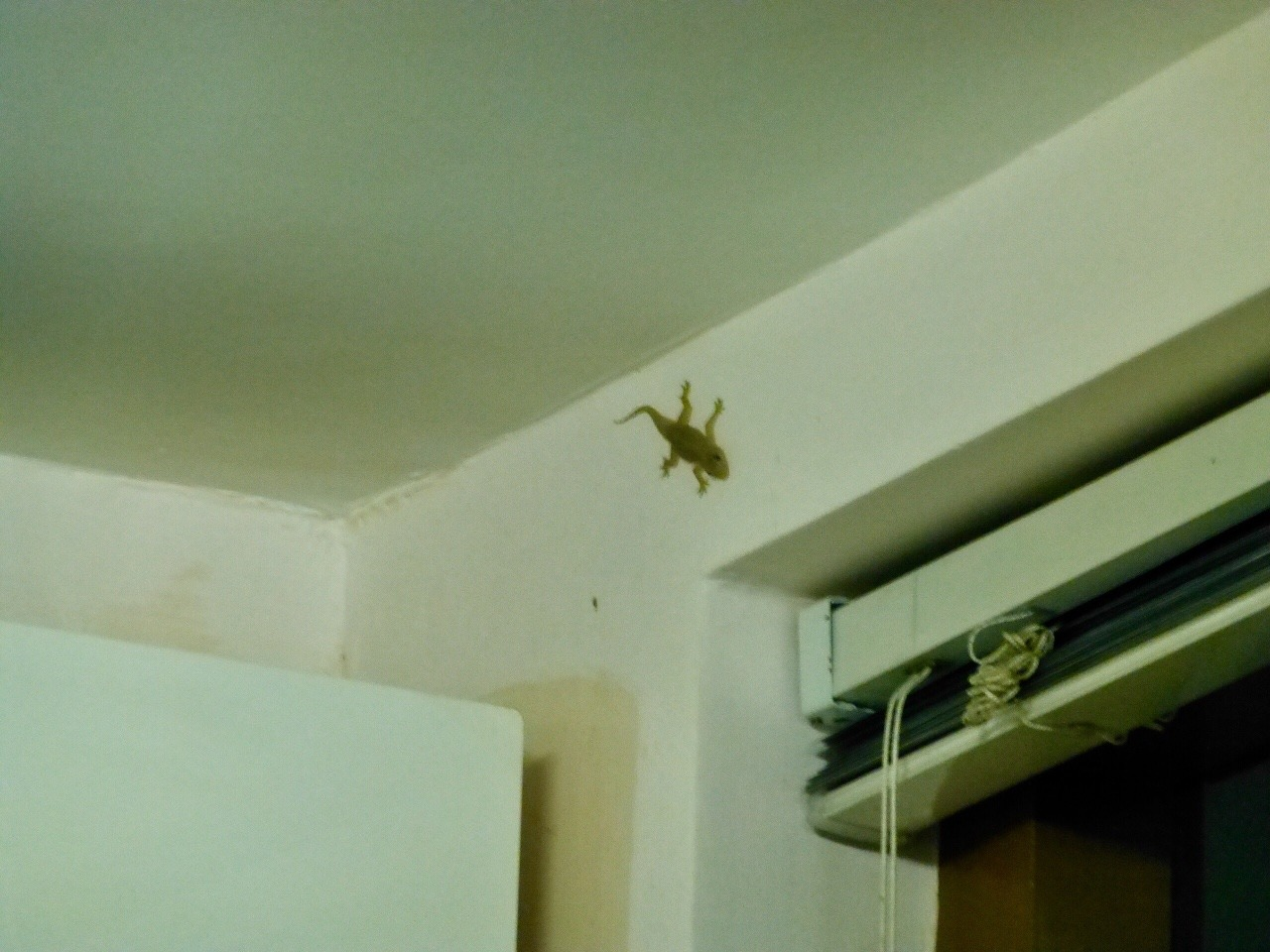 7.1478471007.gecko-in-my-room