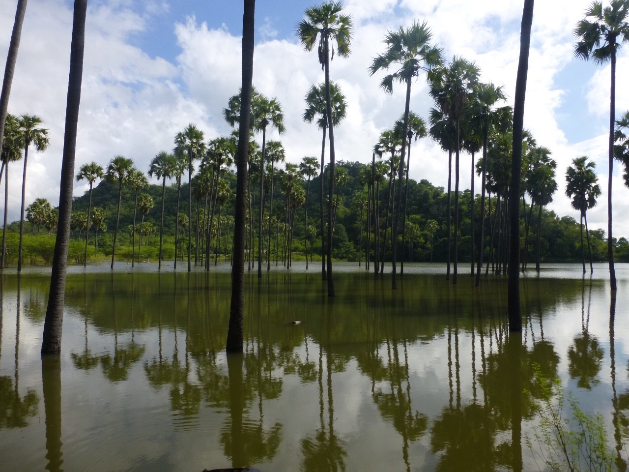 7.1478747059.palm-trees-in-the-middle-of-a-flood-plain